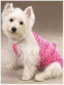 "swimsuit for dog beach ""size m"""